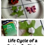 Butterfly Life Cycle Plate