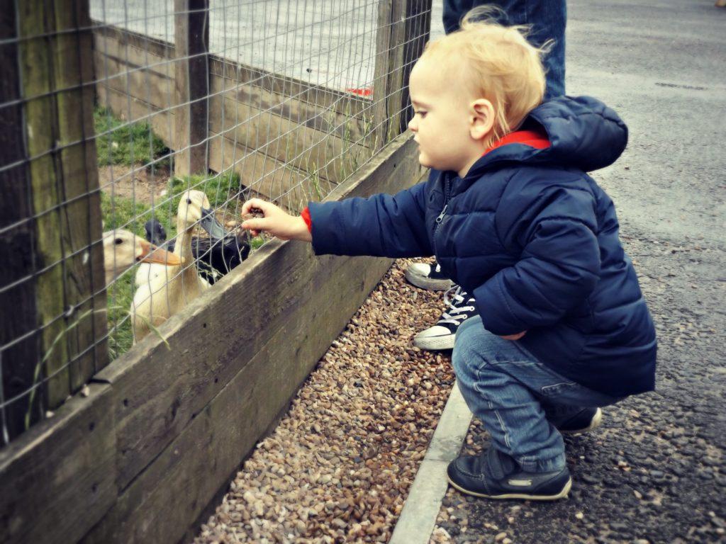 Feeding the ducks #MySundayPhoto | www.coffeecakekids.com