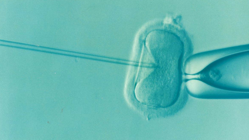 How Does Frozen Donor Egg IVF Work? - Coffee, Cake, Kids