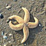 Starfish | My Sunday Photo