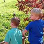 Chester Zoo | Review