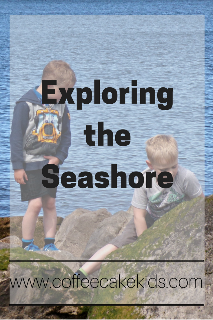 Exploring the seashore with kids