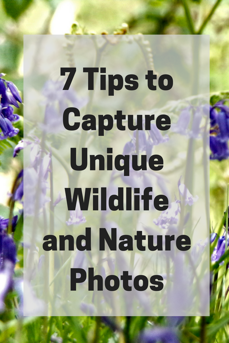 7 tips to captire unique wildlife and nature photos