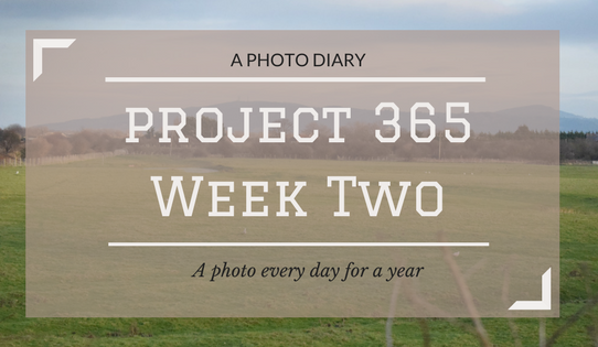 Project 365 Week Two : A photo every day for a year