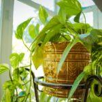 Amaze Everyone with Custom Designer Faux Plants