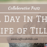 A Day In The Life Of Tilly
