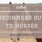 A Beginners Guide To Horses