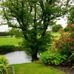 Top Tips For Landscaping Your Back Garden