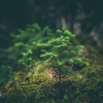 Top Tips For An Eco-Friendly Business